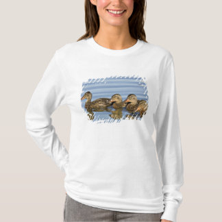 T-shirt L'Amérique du Nord, Canada, Colombie-Britannique,