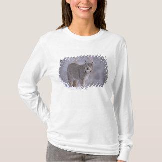 T-shirt L'Amérique du Nord, Etats-Unis, Alaska, Haines.