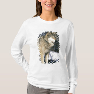 T-shirt L'Amérique du Nord, Etats-Unis, Minnesota. Loup