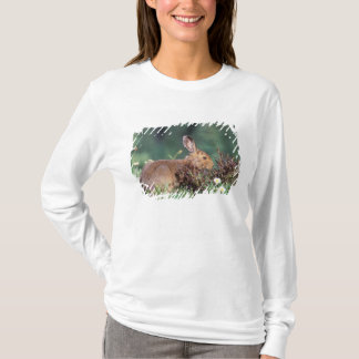T-shirt L'Amérique du Nord, Etats-Unis, Washington, 5
