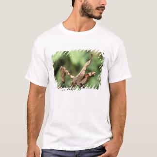 T-shirt L'Amérique du Sud, Equateur, Amazone. Mante de
