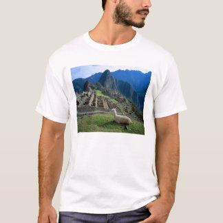 T-shirt L'Amérique du Sud, Pérou. Un lama se repose sur