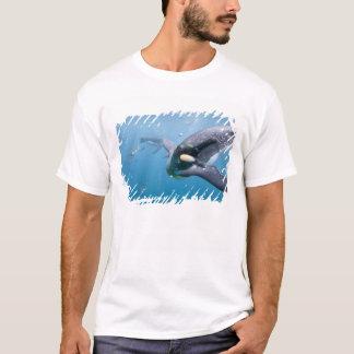 T-shirt L'Antarctique, île du sud R-U de la Géorgie),