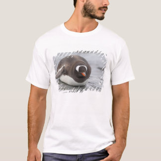 T-shirt L'Antarctique, péninsule antarctique. Petermann