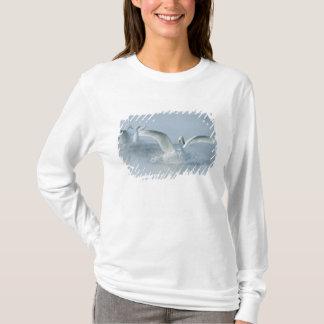 T-shirt L'Asie, Japon, Hokkaido, Akan NP, lac Kussharo,