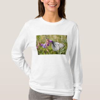 T-shirt L'Asie, Mongolie, Khovsgol Nuur NP. Pieris Napi