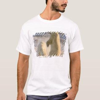 T-shirt Le Canada, Manitoba, baie de Hudson, Churchill.