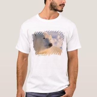 T-shirt Le Canada, Manitoba, baie de Hudson, Churchill. 4