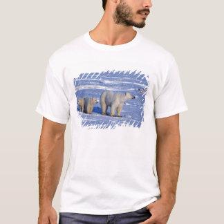 T-shirt Le Canada, Manitoba, Churchill. Mère d'ours blanc