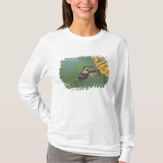 T-shirt Le colibri de la côte, costae de Calypte, jeunes