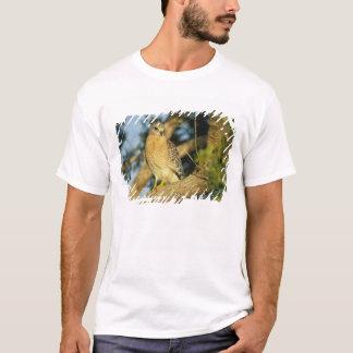 T-shirt le faucon rouge-épaulé, lineatus de Buteo, se