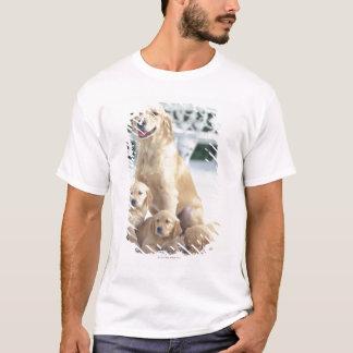 T-shirt Le golden retriever est relativement un moderne et