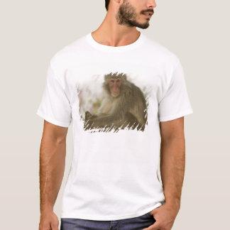 T-shirt Le Japon, île de Honshu, Kyoto, singe d'Arashiyama