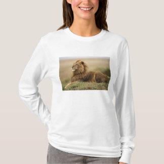 T-shirt Le Kenya, masai Mara. Lion de mâle adulte sur le