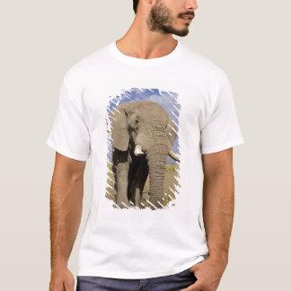 T-shirt Le Kenya : Parc national d'Amboseli, éléphant