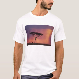 T-shirt Le Kenya : Parc national de Mara de masai, coucher