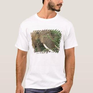 T-shirt Le Kenya, réservation nationale de Samburu. Plan