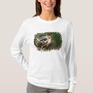 T-shirt Le mâle Châtaigne-a dégrossi fauvette, Dendroica