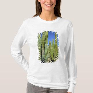T-shirt Le Mexique, Sonora, São Carlos. Tuyau de Saguaro