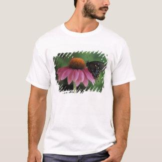 T-shirt Le Michigan, Rochester. Machaon de Spicebush