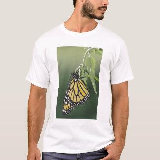 T-shirt Le monarque, plexippus de Danaus, adulte a