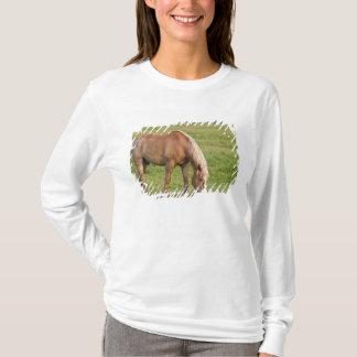 T-shirt Le Nouveau Brunswick, Canada. Cheval dans le