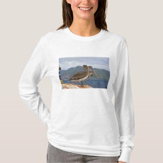 T-shirt Le pélican de Brown (Pelecanus Occidentalis)