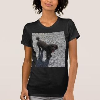 T-shirt Le petit caniche noir