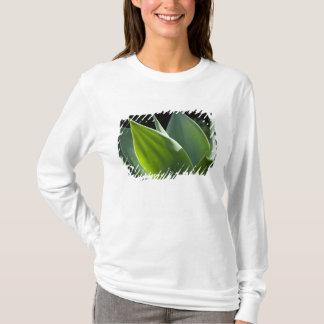 T-shirt Le Portugal, île de la Madère, Funchal. Botanique