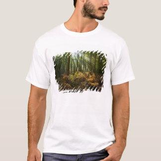 T-shirt Le R-U, Angleterre. Rayons de lumière du soleil