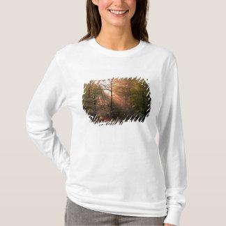 T-shirt LE R-U. Forêt de doyen. Sunbeam pénétrant a