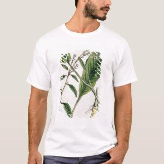 """T-shirt Le raifort, plaquent 415 """"d'un de fines herbes"""