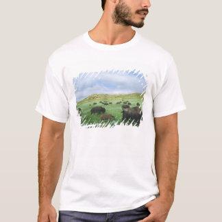 T-shirt Le troupeau de bison frôlent l'herbe de prairie