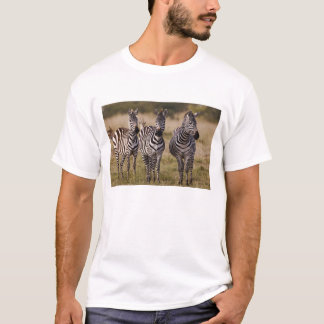 T-shirt Le zèbre de Burchell, burchellii d'Equus, masai