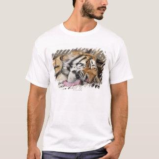 T-shirt Lèchement d'altaica du Tigre de Panthera de tigre