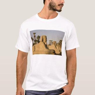 T-shirt L'Egypte, Louxor. L'avenue des sphinx mène à