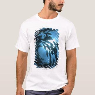 T-shirt L'Equateur, archipel de Galapagos, île de loup,