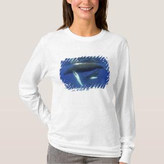 T-shirt Les Caraïbe, archipel du Grandes Antilles,
