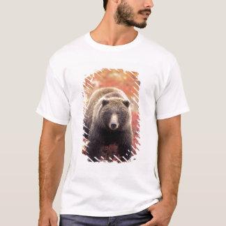 T-shirt Les Etats-Unis, Alaska, Denali NP, ours gris