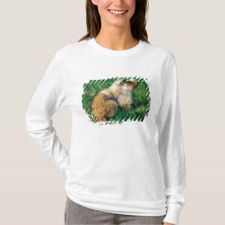 T-shirt Les Etats-Unis, Alaska, parc national de Denali, 2