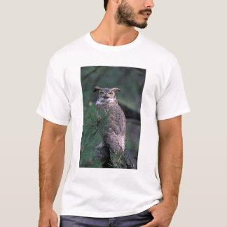 T-shirt Les Etats-Unis, Co, Colorado Springs. Grand hibou