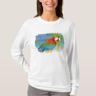 T-shirt Les Etats-Unis, Hawaï. Perroquet