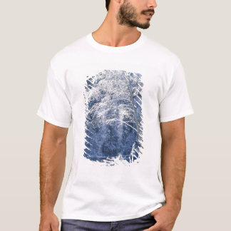 T-shirt Les Etats-Unis, la Californie, parc national de