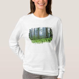 T-shirt Les Etats-Unis, la Californie, séquoia NP. Arbres