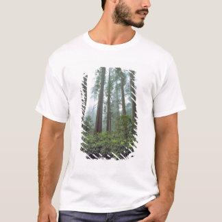T-shirt Les Etats-Unis, la Californie, séquoia NP. Le