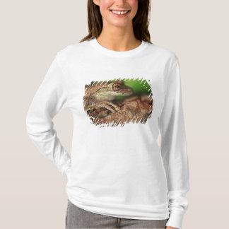 T-shirt Les Etats-Unis, la Floride, grenouille d'arbre