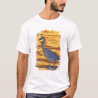 T-shirt Les Etats-Unis, la Floride, St Petersburg, parc de