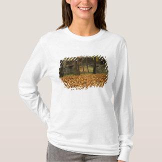 T-shirt Les Etats-Unis, la Virginie, Covington, bosse