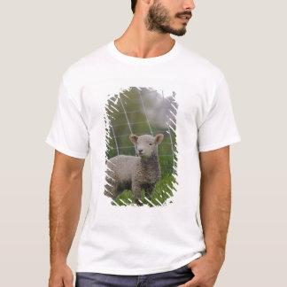 T-shirt Les Etats-Unis, le Massachusetts, Shelburne. Un