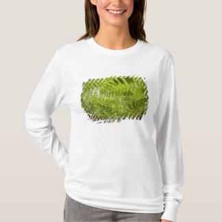 T-shirt Les Etats-Unis, Minnesota, rivage du nord le lac